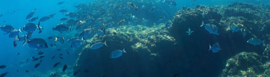 Retrouvez tous les accessoires de chasse sous marine-Moulinets plongée